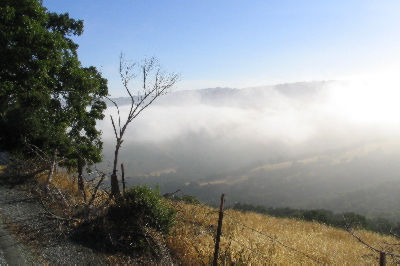 7-7-04-fog.jpg