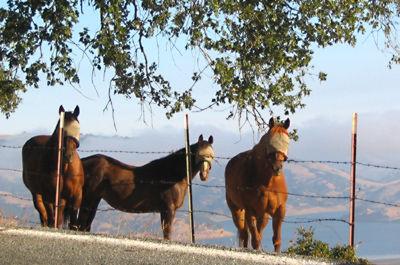 7-8-04-horseburqas.jpg