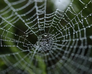 spider's web illustrating a network of apps enabled by APIs
